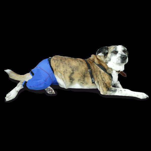 Pantalón Prenda Protectora Veterinaria PPV antibacteriana ideada para cubrir y proteger desde la cintura al rabo y parte de las patas traseras de la mascota. Heridas, lesiones cutáneas, posoperatorio, apósitos...