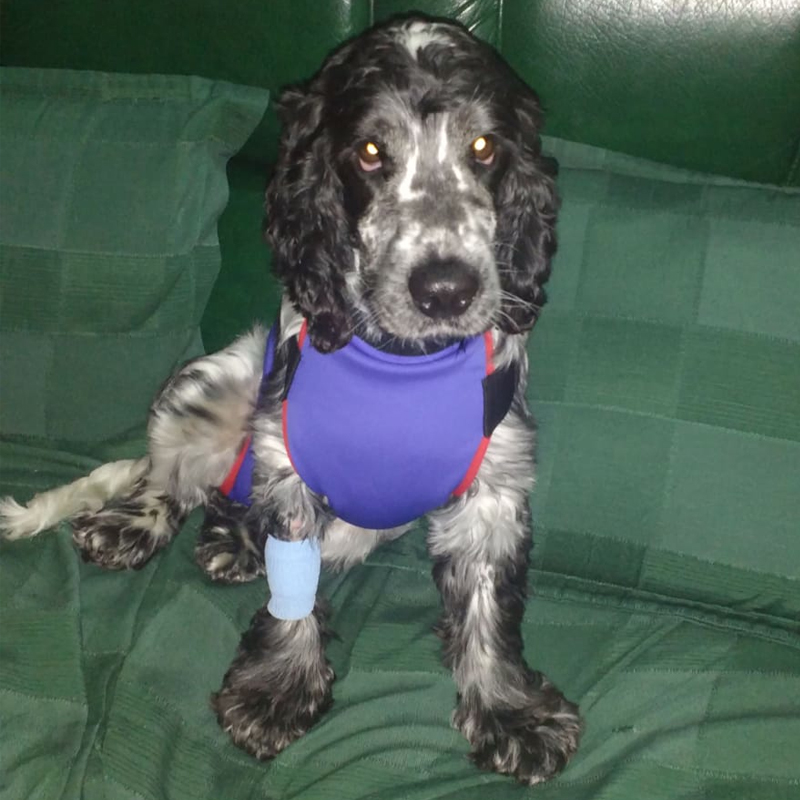 peto prenda protectora veterinaria ppv para pecho y abdomen posoperatorios postoperatorios mascotas