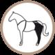 pata trasera prenda protectora veterinaria PPV para caballo