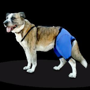Pantalón Prenda Protectora Veterinaria PPV antibacteriana Pantalón ideada para cubrir y proteger desde la cintura al rabo y parte de las patas traseras de la mascota. Heridas, lesiones cutáneas, posoperatorio, apósitos...