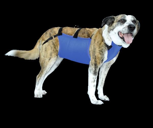 Prenda Protectora Veterinaria PPV antibacteriana ideada para cubrir y proteger el pecho y abdomen de la mascota. Heridas, lesiones cutáneas, posoperatorio, apósitos...