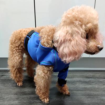 prenda protectora veterinaria ppv especial protegiendo las cirugías repartidas por el cuerpo tras extraer múltiples tumores en perra prenda postquirúgica posoperatoria postoperatoria