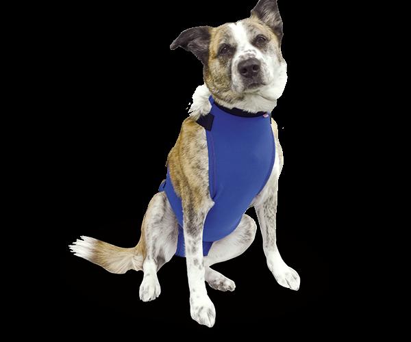 Prenda Protectora Veterinaria PPV antibacteriana ideada para cubrir y proteger la el pecho y abdomen de la mascota. Heridas, lesiones cutáneas, posoperatorio, apósitos...
